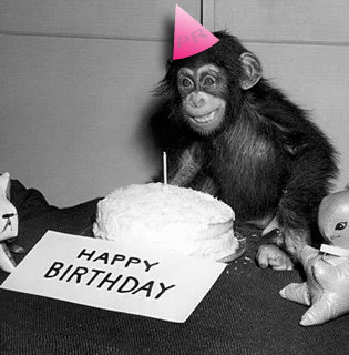 Monkey in a birthday hat